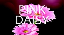 Mini Pink Daisy minivulling 100ml/65gr. 3000shots /12 st